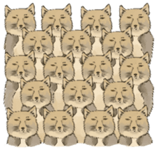 Tibetan Sand Fox of a straight face sticker #10883999