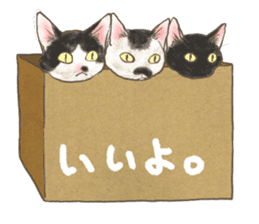 CAT IN THE BOX and ... sticker #10904233