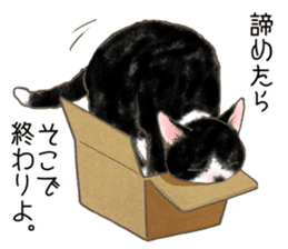 CAT IN THE BOX and ... sticker #10904237