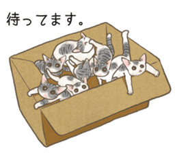 CAT IN THE BOX and ... sticker #10904248