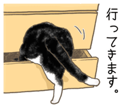 CAT IN THE BOX and ... sticker #10904249