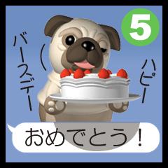 Innocent pug 5