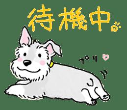 Miniature Schnauzer SYU-chan sticker #10959138