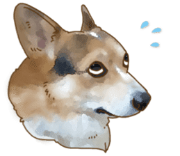 Dangerous Corgi 2 sticker #10968256