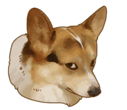 Dangerous Corgi 2 sticker #10968264
