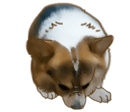 Dangerous Corgi 2 sticker #10968265