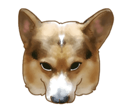 Dangerous Corgi 2 sticker #10968273