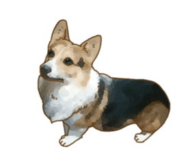 Dangerous Corgi 2 sticker #10968274