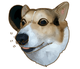 Dangerous Corgi 2 sticker #10968280