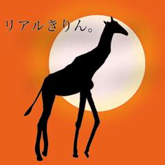 Giraffe's dally