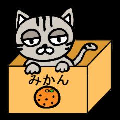 ブサ猫のココ