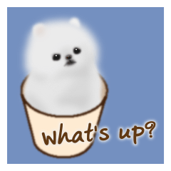 Cute White Pomeranian (English Ver.)