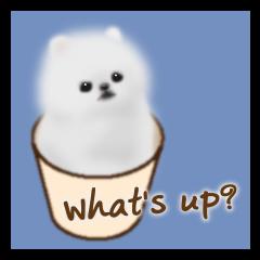 Cute White Pomeranian (English Ver.)
