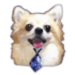 Komaru of a Chihuahua Business Version