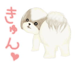 Shih Tzu communication sticker sticker #11174434