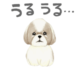 Shih Tzu communication sticker sticker #11174438
