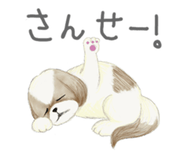 Shih Tzu communication sticker sticker #11174443
