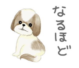 Shih Tzu communication sticker sticker #11174446