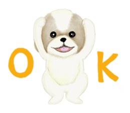 Shih Tzu communication sticker sticker #11174453