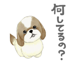 Shih Tzu communication sticker sticker #11174458