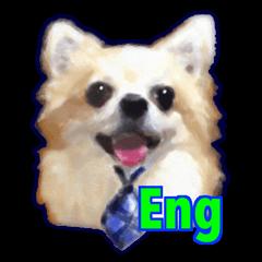 Komaru of a Chihuahua 2 (English)