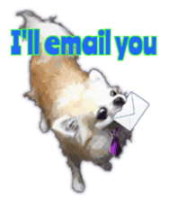 Komaru of a Chihuahua 2 (English) sticker #11252876
