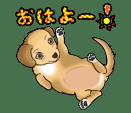 Chiroru's daily life. sticker #11253192