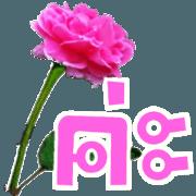 สติ๊กเกอร์ไลน์ สนทนาภาษาดอกไม้ (บิ๊กสติกเกอร์)