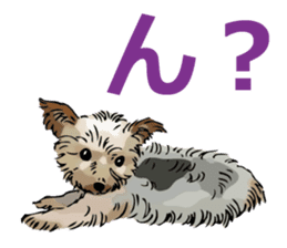 Yorkshire Terrier and Shih Tzu sticker #11313376