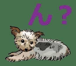 Yorkshire Terrier and Shih Tzu sticker #11313376