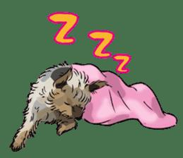 Yorkshire Terrier and Shih Tzu sticker #11313378