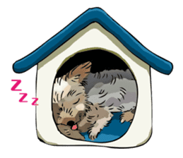 Yorkshire Terrier and Shih Tzu sticker #11313380