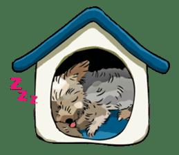 Yorkshire Terrier and Shih Tzu sticker #11313380