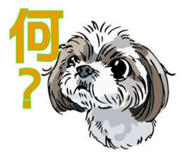 Yorkshire Terrier and Shih Tzu sticker #11313382