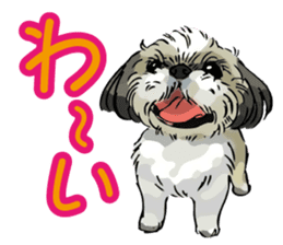 Yorkshire Terrier and Shih Tzu sticker #11313383