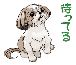 Yorkshire Terrier and Shih Tzu sticker #11313385