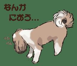 Yorkshire Terrier and Shih Tzu sticker #11313386