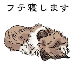 Yorkshire Terrier and Shih Tzu sticker #11313387