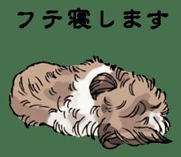 Yorkshire Terrier and Shih Tzu sticker #11313387
