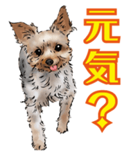 Yorkshire Terrier and Shih Tzu sticker #11313388