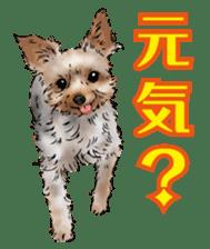 Yorkshire Terrier and Shih Tzu sticker #11313388
