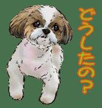 Yorkshire Terrier and Shih Tzu sticker #11313389