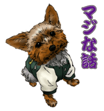 Yorkshire Terrier and Shih Tzu sticker #11313390
