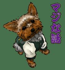 Yorkshire Terrier and Shih Tzu sticker #11313390