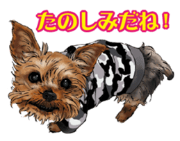 Yorkshire Terrier and Shih Tzu sticker #11313391