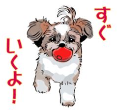Yorkshire Terrier and Shih Tzu sticker #11313393