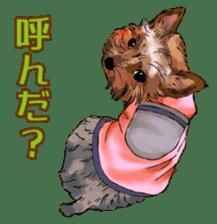 Yorkshire Terrier and Shih Tzu sticker #11313397