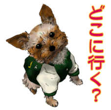 Yorkshire Terrier and Shih Tzu sticker #11313401