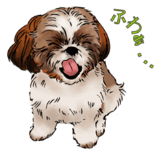 Yorkshire Terrier and Shih Tzu sticker #11313402