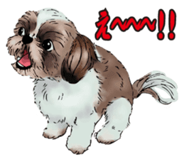 Yorkshire Terrier and Shih Tzu sticker #11313403